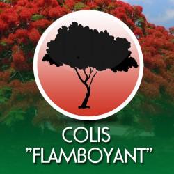 Colis Flamboyant